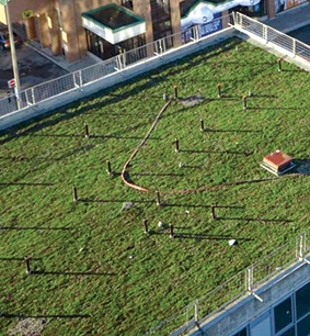 Green Roof Initiative